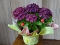 prekyba-dekoratyviniais-augalais-kaune-1