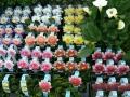 prekyba-dekoratyviniais-augalais-kaune-300