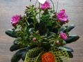 prekyba-dekoratyviniais-augalais-kaune-310