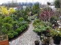 prekyba-dekoratyviniais-augalais-kaune