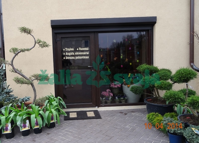 dekoratyviniu-augalu-prekyba-100