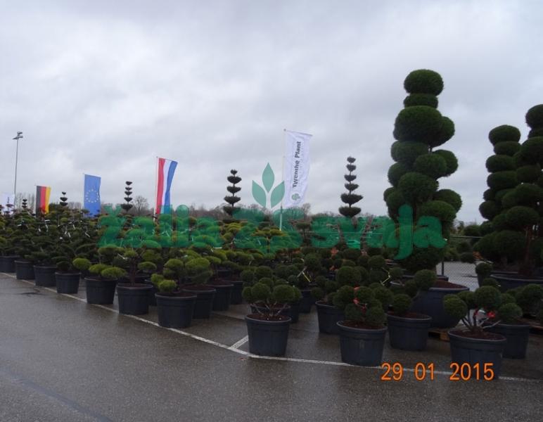 dekoratyviniu-augalu-prekyba-102