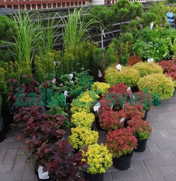 dekoratyviniu-augalu-prekyba-200