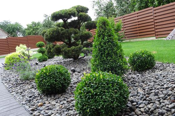 augalu-gyvatvoriu-sodinimas